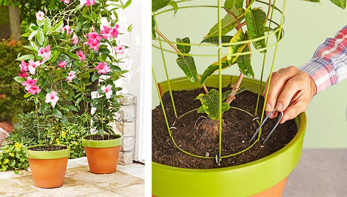 Create a DIY trellis perfect for flowering vines in a flowerpot.