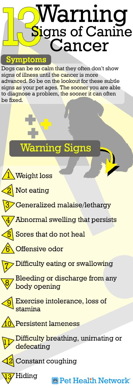 Not a comfort-Just need to know... 13 Warning Signs of Canine Cancer! A must read if you're a dog owner, you can never be too safe!