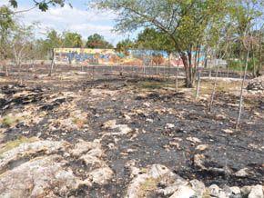 Delincuentes incendian el Parque Ecológico Memorial Los Palmeros - Cachicha.com