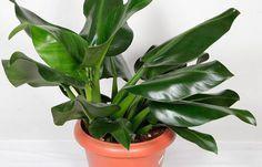 5 plantas que ajudam a limpar o ar dentro de casa