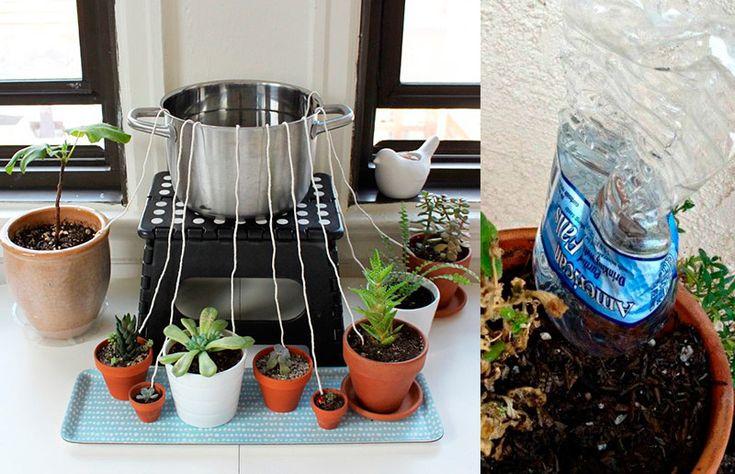 Truques para molhar as plantas na viagem: para vaso grande e vaso pequeno
