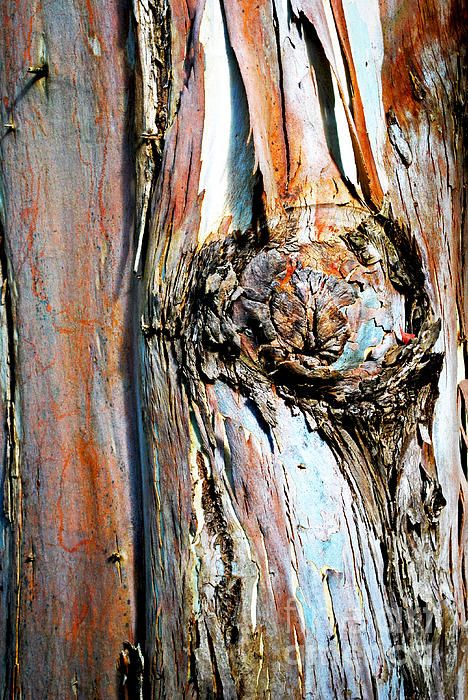 Detail photograph of an old tree's colourful bark.