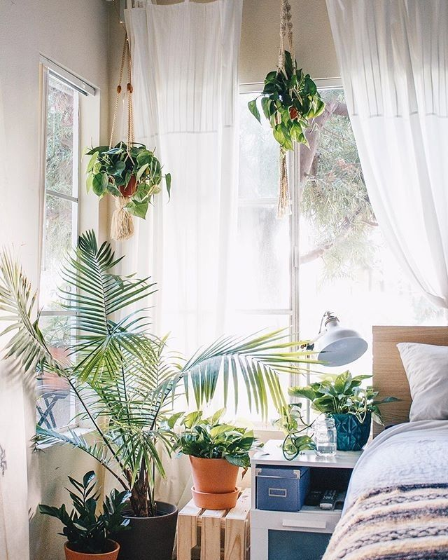 Living Room Decor Plants 1749 best i love plants images on pinterest | plants, indoor