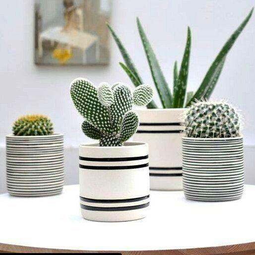 Estes vasinhos combinam muito com os #minicactos . Uma graça!  #Repost @revistacasaclaudia with @repostapp  #cactos #jardim #plantas