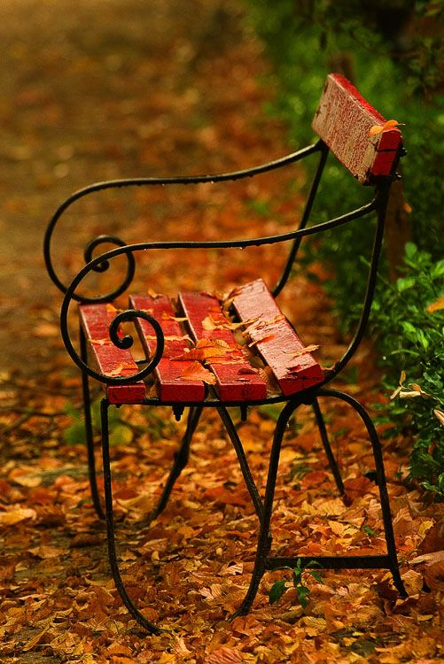Wayside chair strewn with fall leaves.