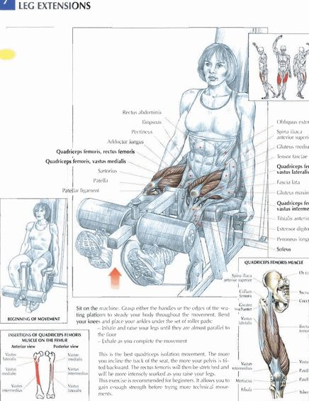 Leg Extensions     #exercise #workout #routine #fitness
