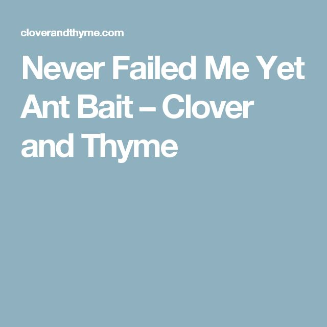 Never Failed Me Yet Ant Bait – Clover and Thyme