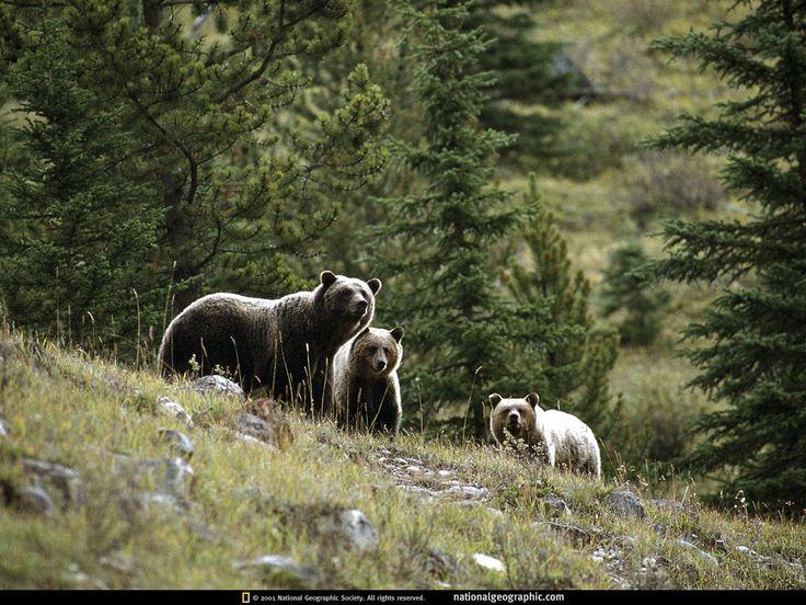 Animaux sauvages - Photos et fonds d'écran: http://wallpapic.fr/national-geographic-photos/animaux-sauvages/wallpaper-38350