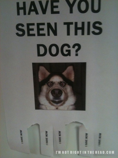 have you?Can'T Stop Laugh, Funny Things, Random Funny, Fun Stuff, Funny Bones, Funny Stuff, Funny Puppies, Fun Webstuff, Dogs Face