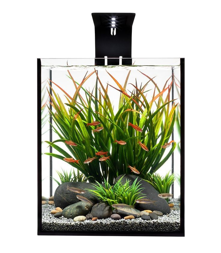 Amazon.com : Ecoxotic EcoPico Desktop Aquarium System with LED Arm and Filter, 5-Gallon : Saltwater Aquarium Kit : Pet Supplies. It's come DOWN in price! This thing is sleek, beautiful and I want it! Also bonus extra lights available if I want to do saltwater again. :)