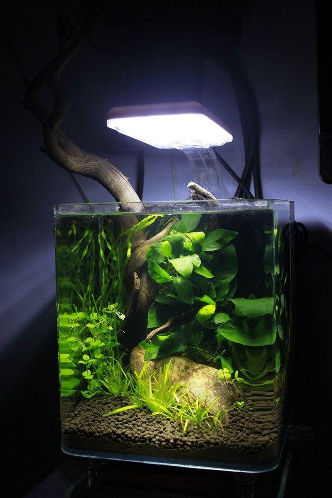 166 best planted nano aquariums images on pinterest fish for Nano cube fish tank