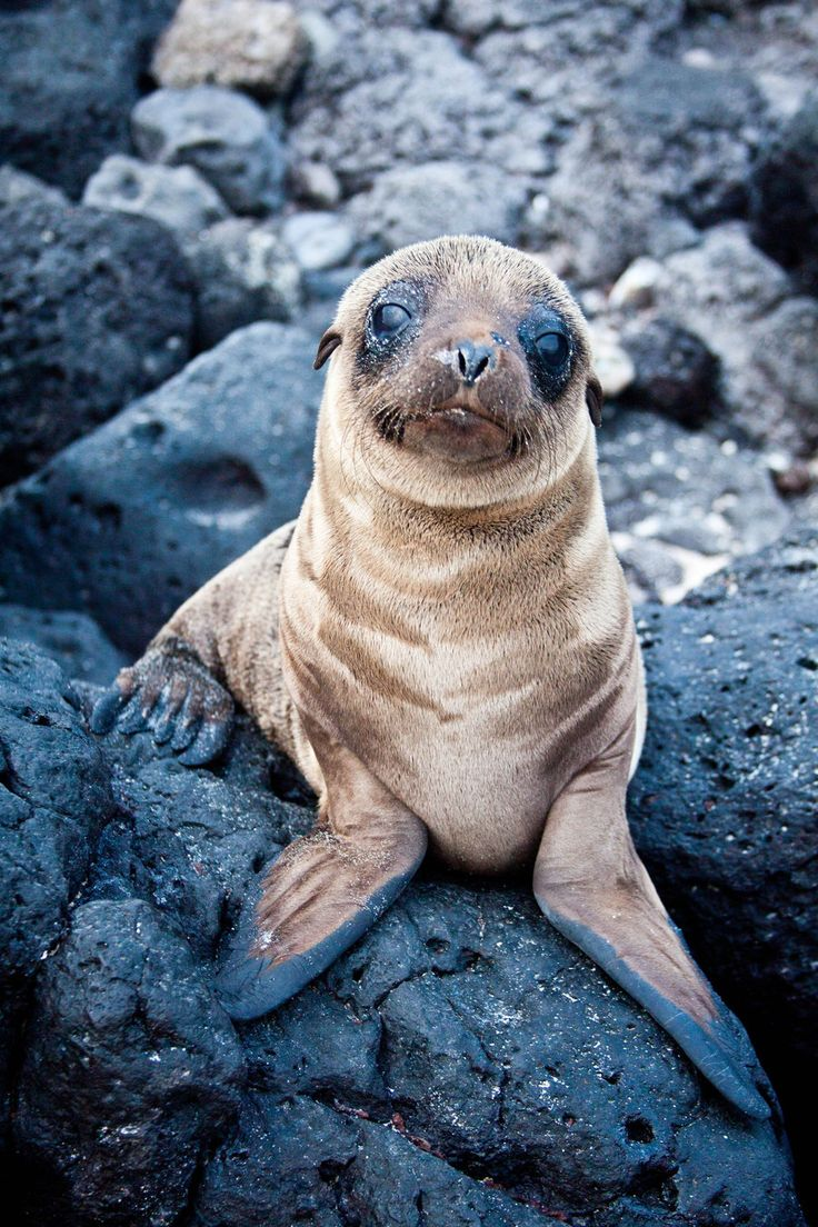 Adorable baby sea lion. um...WANT ONE!   Things I Love ...