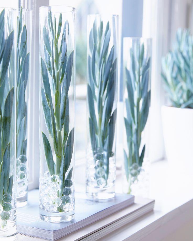 Assez 33 best Senecio images on Pinterest | Succulent plants, Mount  MU12