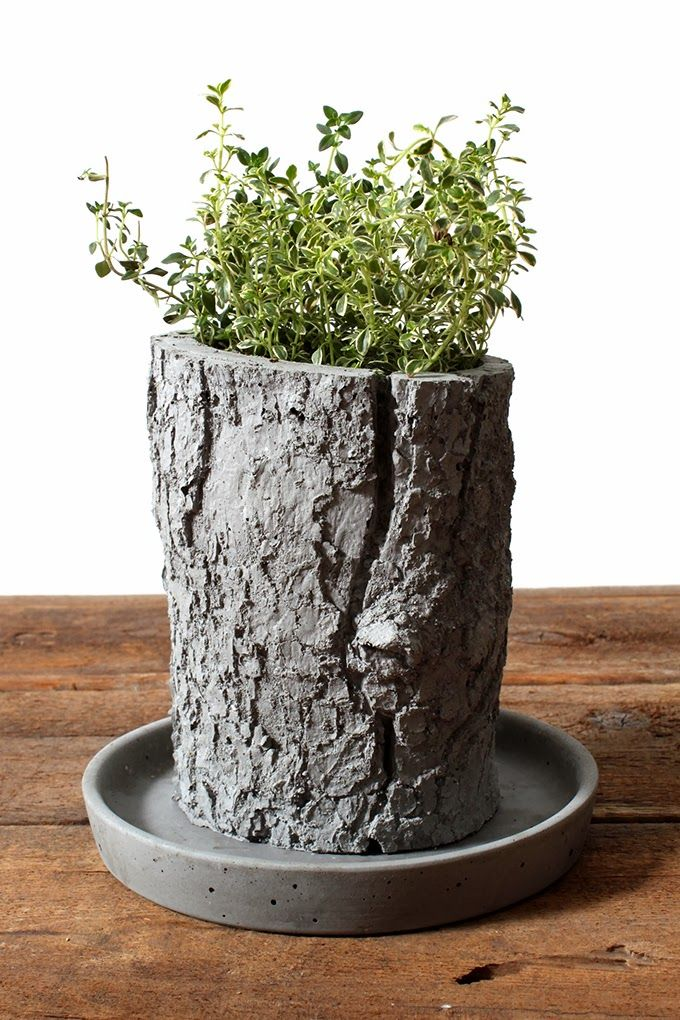 planter that has wood and concrete, growth from decay