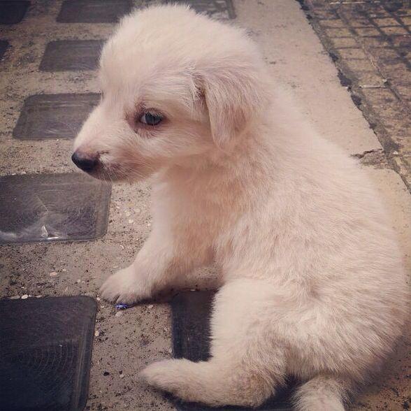 #mioamor #tenerume #dog #benarrivato #solonostro