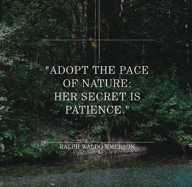 Emerson Nature Quotes: Best 25+ Quotes Of Nature Ideas On Pinterest