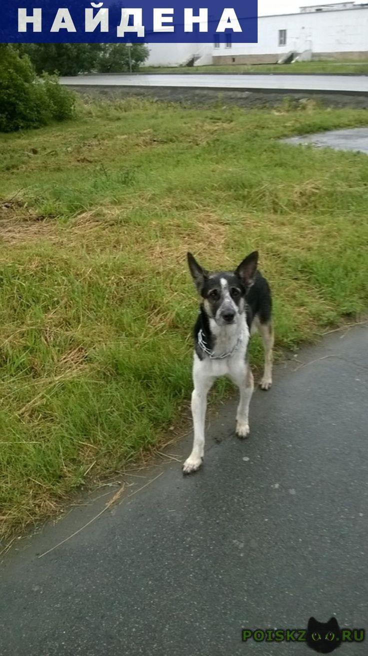 Найдена собака г.Челябинск http://poiskzoo.ru/board/read25114.html  POISKZOO.RU/25114 Кто потерял собаку? В металическом ошейнике. Боится, не подходит даже на еду. У него что-то с передними лапами, тяжело ходит! Северо-восток.   РЕПОСТ! @POISKZOO2 #POISKZOO.RU #Найдена #собака #Найдена_собака #НайденаСобака #Челябинск