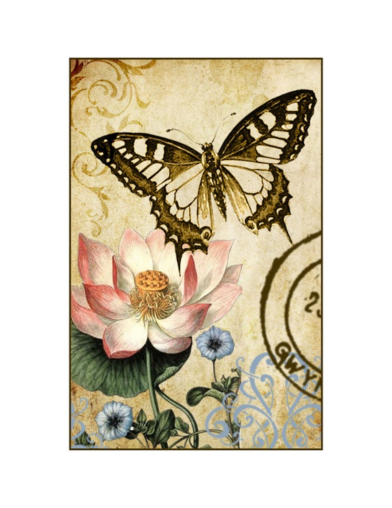 Water Lily Botanical Illustration with Butterfly...
