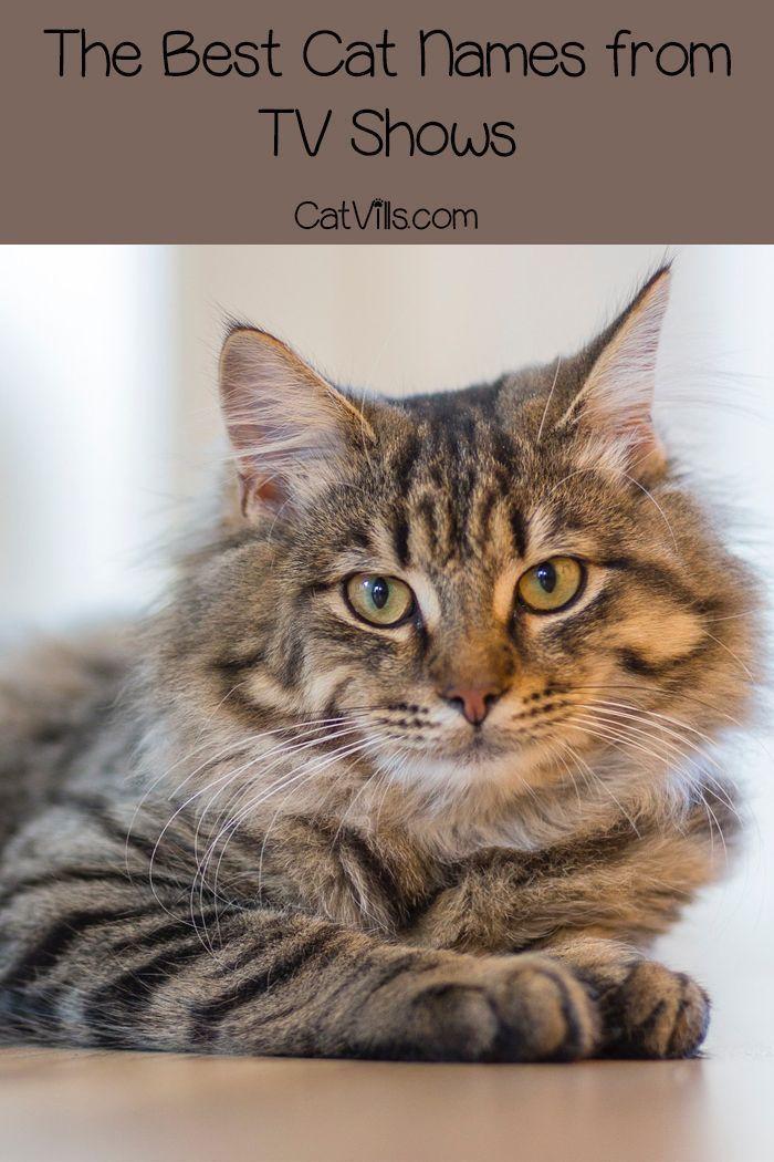 Suchen Sie Nach Dem Besten Katzennamen Aus Fernsehsendungen Es