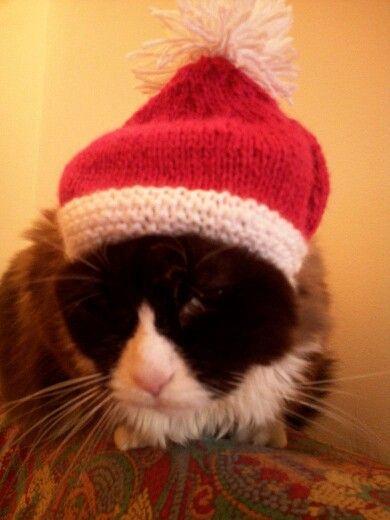 Anche per i nostri amici animali é Natale..