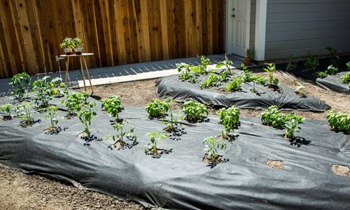 17 Best Images About Diy Outside On Pinterest Gardens Planters And Vegetable Garden