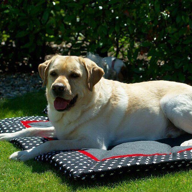 Neuer Liegeplatz = Neuer Lieblingsplatz  Der Labrador Anakin will diesen Sommer…