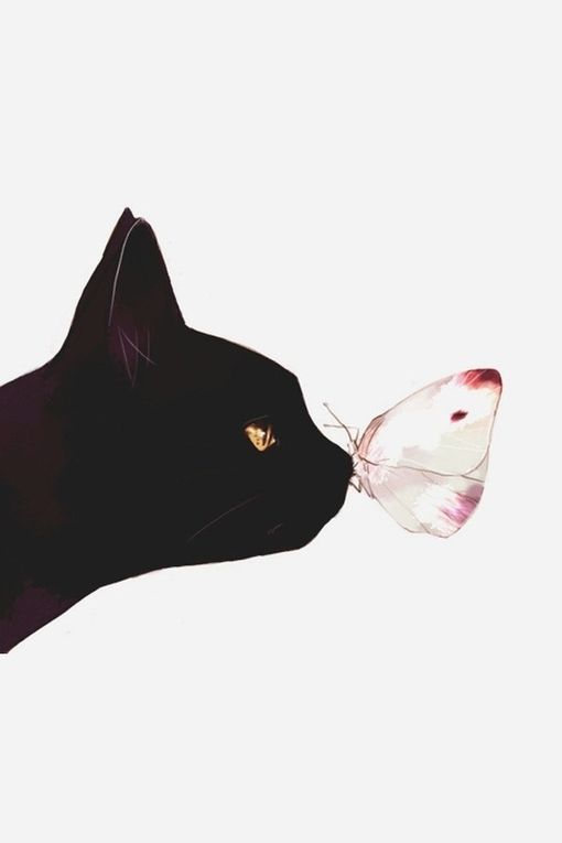 black cat and butterfly. katze. katze. katze.