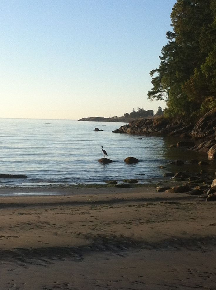 The Blue Heron of Weir's Beach out for a quiet stroll...