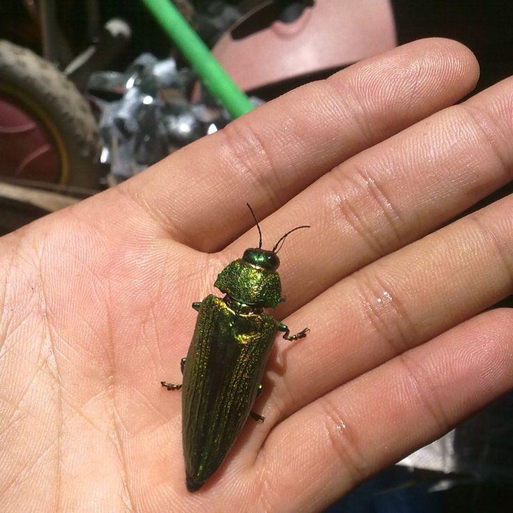 Ladybug#marianadante#bugworld#natgeo#5576