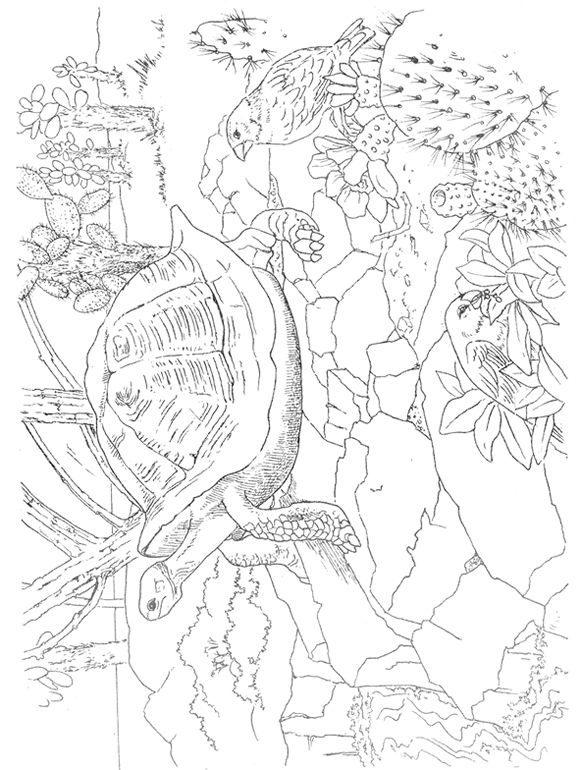 Tropical Paradise Scenes to Paint or Color Dover ...