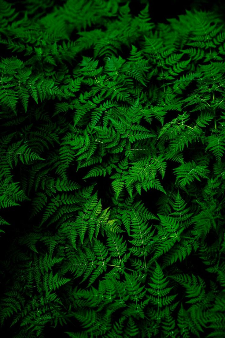 Leaf's
