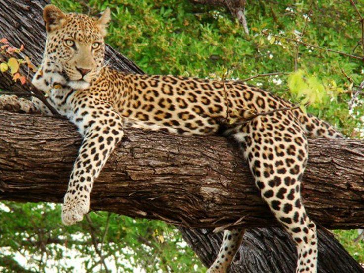 Shoolpaneshwar Wildlife Sanctuary - in Gujarat, India