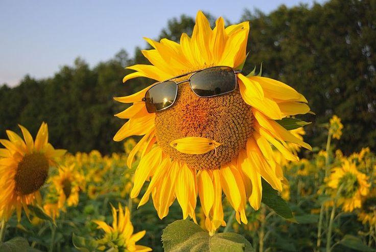 Говорят, лето уже? Копылова Вера – Google+