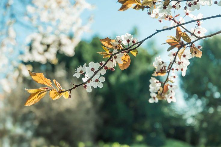 árbol, rama, flores, floración, hojas, primavera, 1701031717