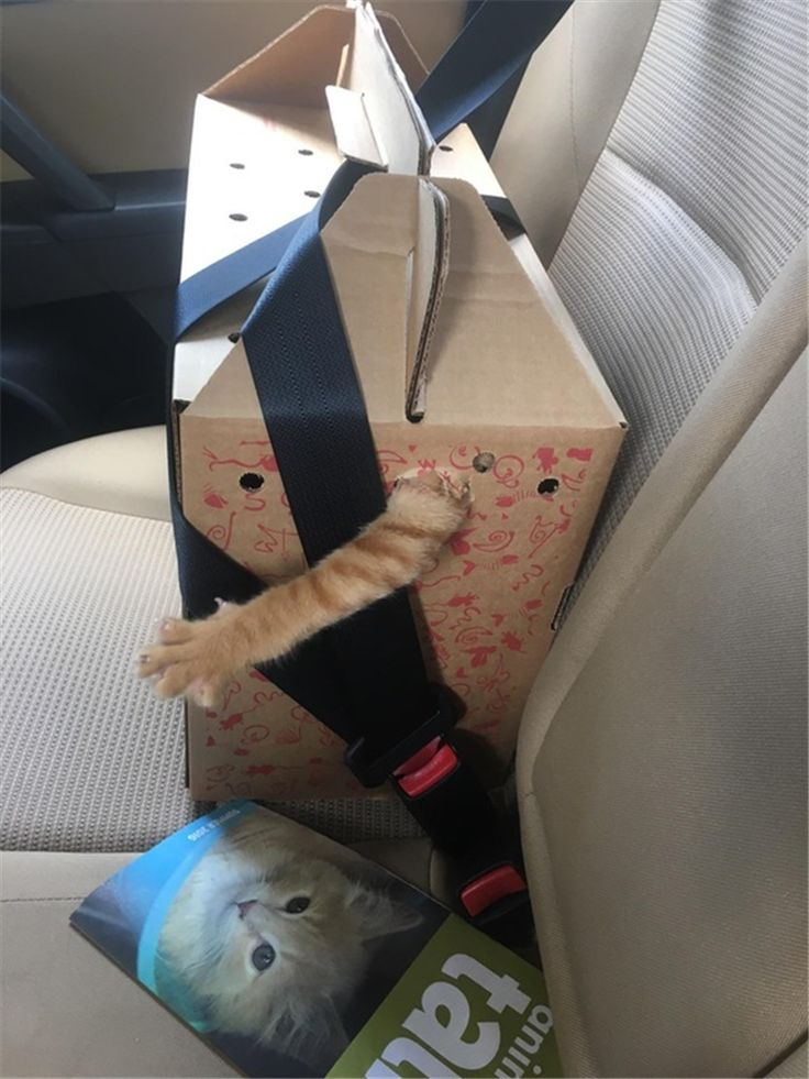 Yep, looks about right for a Cat going for a car ride! ❤️ DancingPetNaturalProducts.com