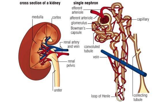 wisbenbae: Ini lho Gambar Anatomi Tubuh Manusia Terlengkap !