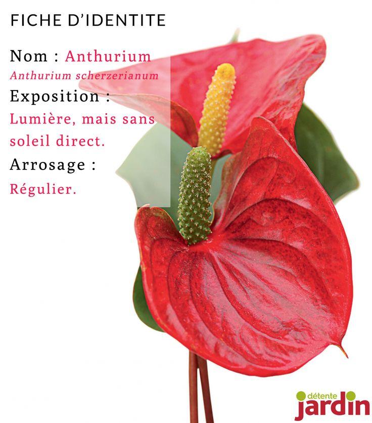 Les 240 meilleures images du tableau plantes d 39 int rieur - Plante interieur anti humidite ...