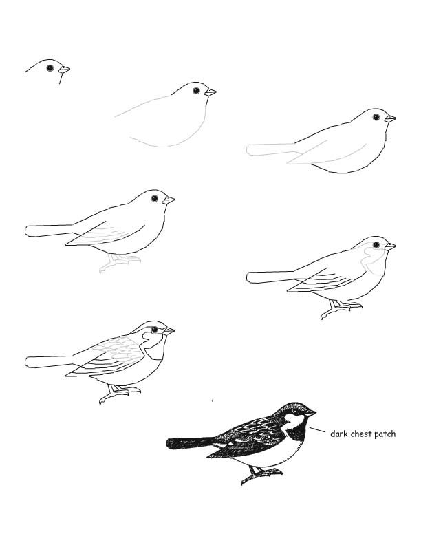 Great tips on how to draw a bird! #birdwatch #pinittowinit