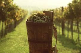 wijnland hongarije- 2