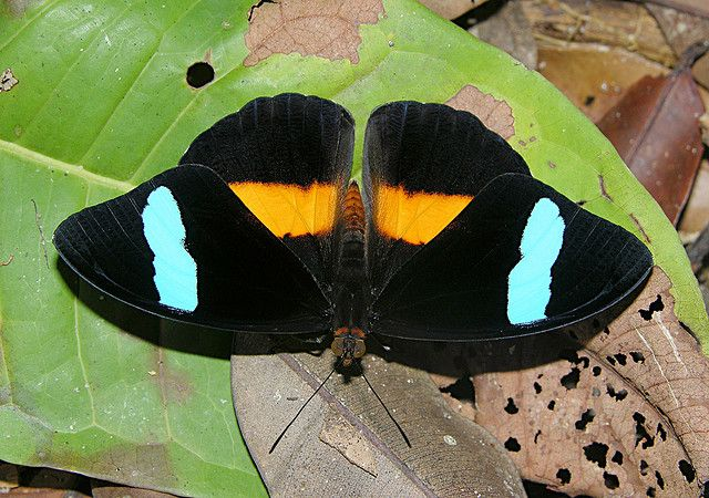 14 Best Images About Butterflies