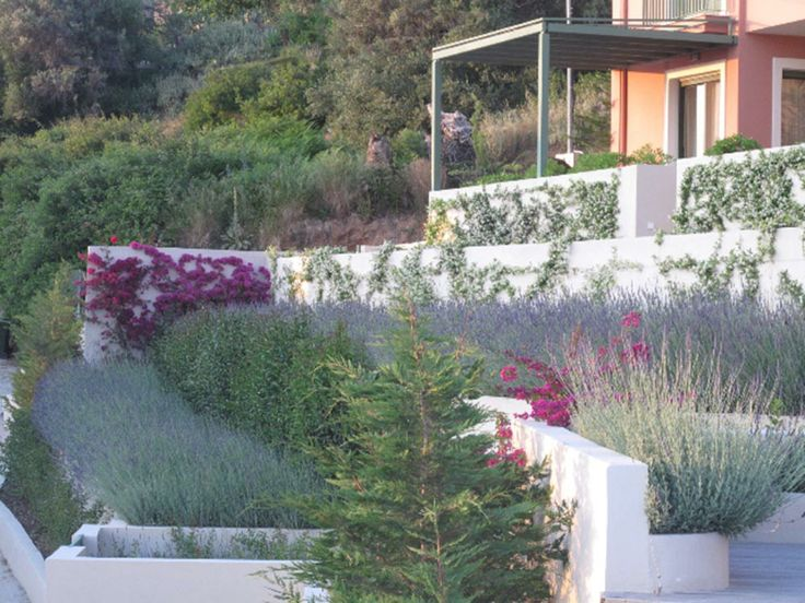 Apartments' garden full of lavenders