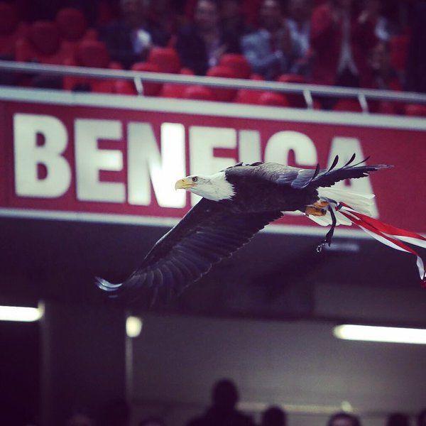 Benfica, rumo ao 35!