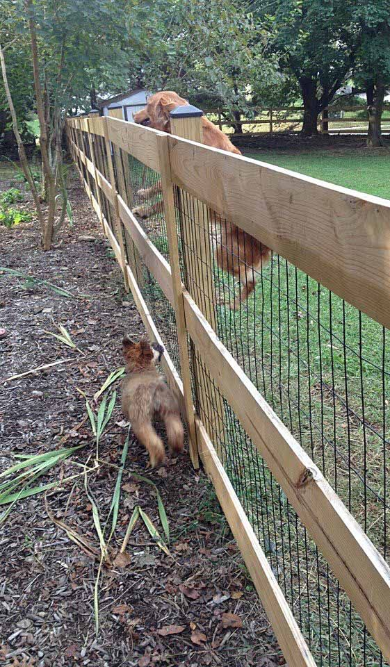 love this simple fencing