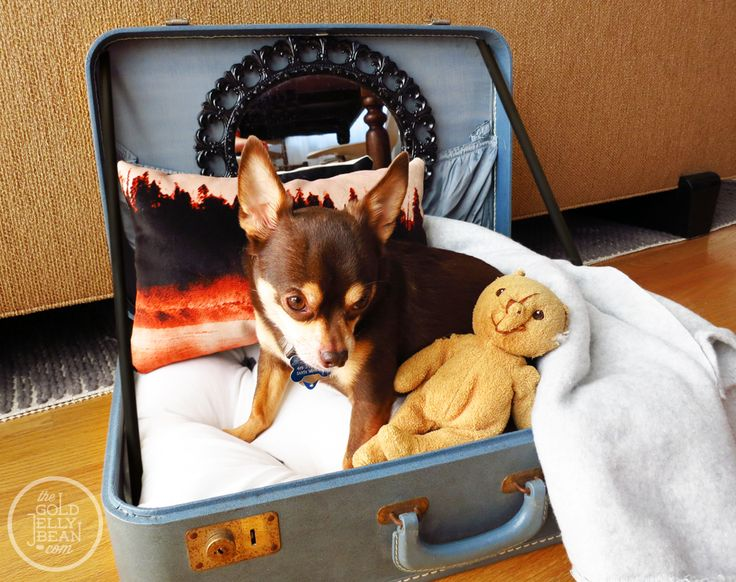 DIY Vintage Suitcase Dog Bed Create a dog bed out of one of your old, vintage suitcase finds. This DIY by Shaleah from The Golden Jelly Bean is quite easy and you can make it as comfy, cozy as your pup would like!