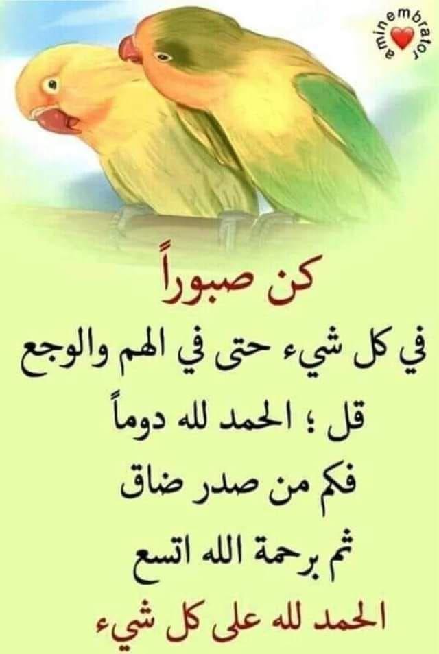 Pin By Maria Trifhat On أدعية و أذكار Animals Bird Parrot