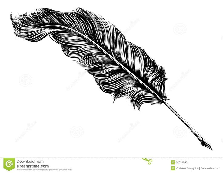 Vintage Feather Quill Pen Illustration Stock Vector