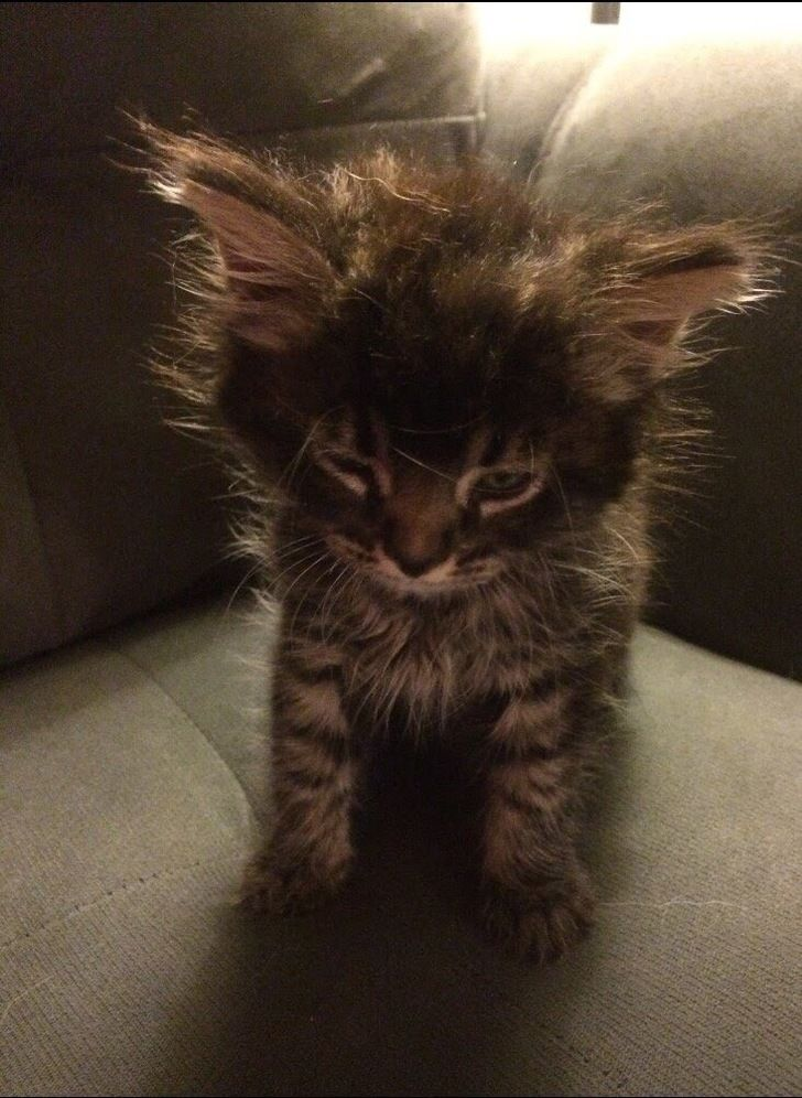 I needs the coffee right meow - Imgur