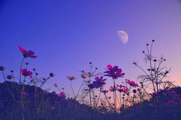 Dark purple aesthetic, lavender aesthetic, aesthetic colors, flower aesthetic,. Pin by Lisbeth on La Vida y sus pequeños Arcoiris
