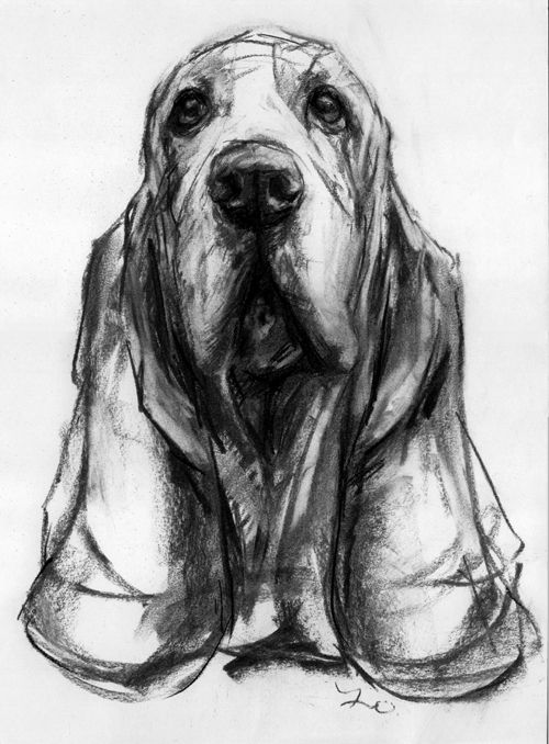 Dogs in Art at the StockBridge Gallery - Basset Hound Charcoal Drawing by Justine Osborne, Not for sale (http://www.dogsinart.com/basset-hound-charcoal-drawing-by-justine-osborne/)