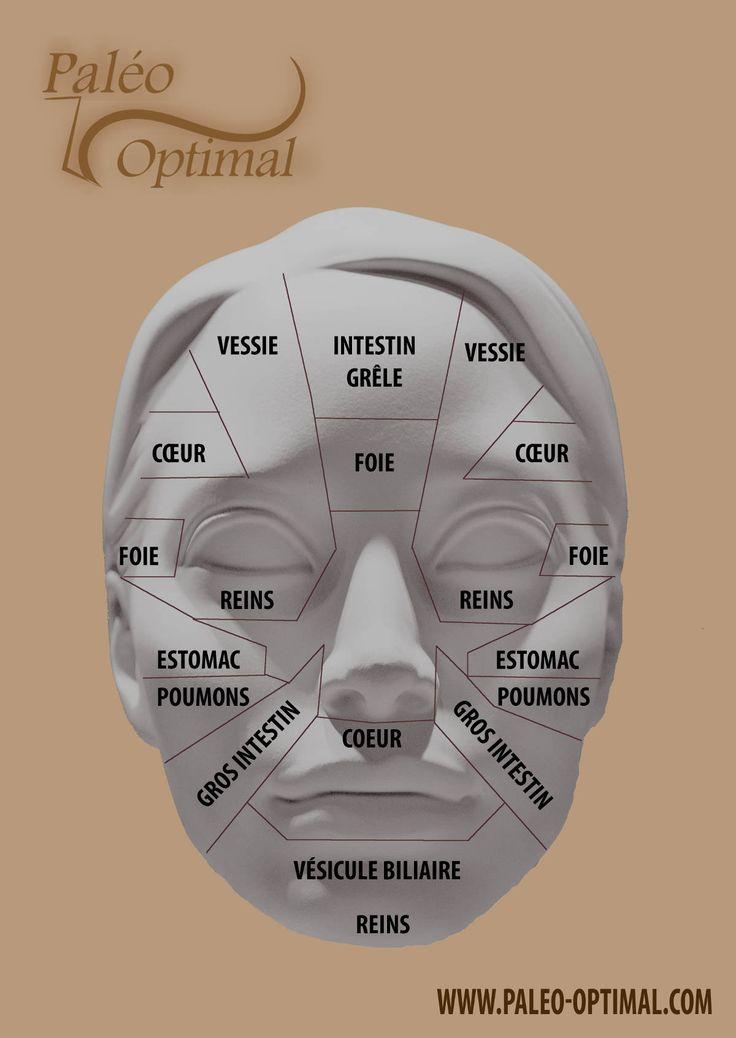 Les méridiens du visage pour faire son bilan de santé